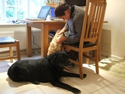 Conscientious and experienced pet and house-sitters