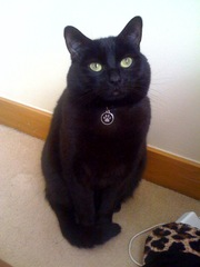 ROCCO THE BLACK CAT NEEDS A NEW HOME!!